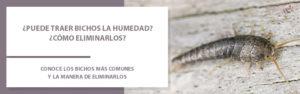 bichos_humedad
